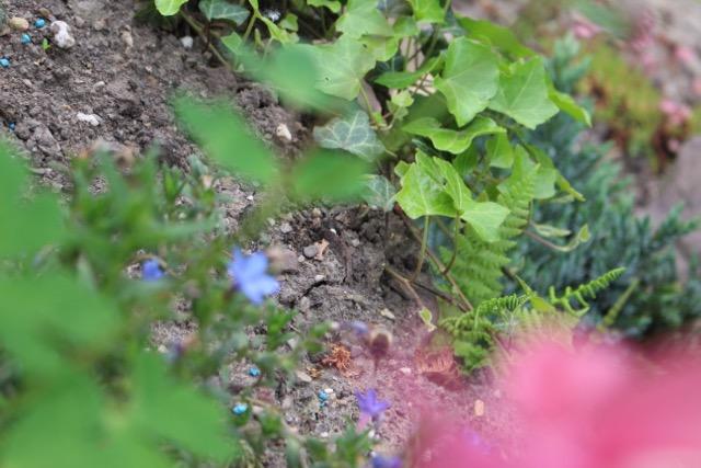 Blumen Foto Canon EOS 700d